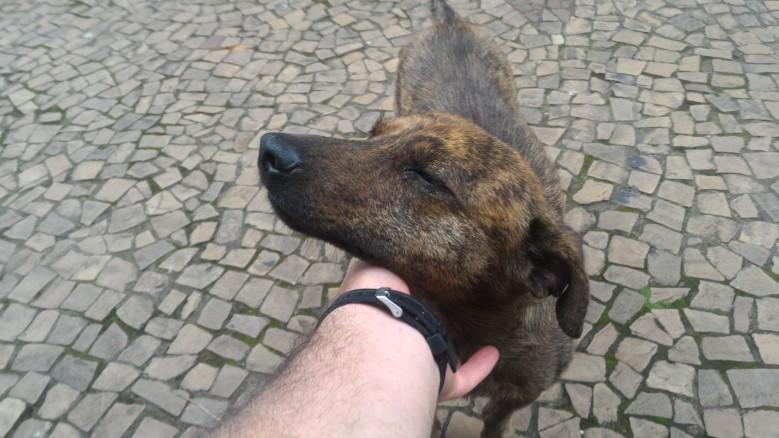 Cão recebendo carinho em Cunha.